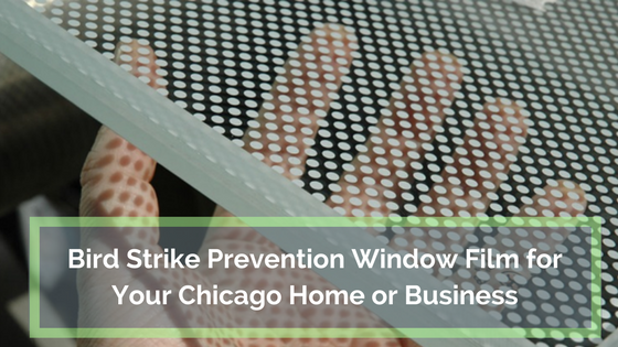 Bird Strike Prevention Window Film for Your Chicago Home or Business
